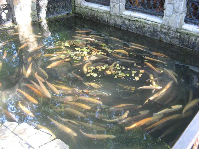 Пруд для разведения рыбы выгодно ли