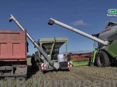 Златоулочка красноярск последние новости видео